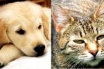 Pomagamy zwierzętom